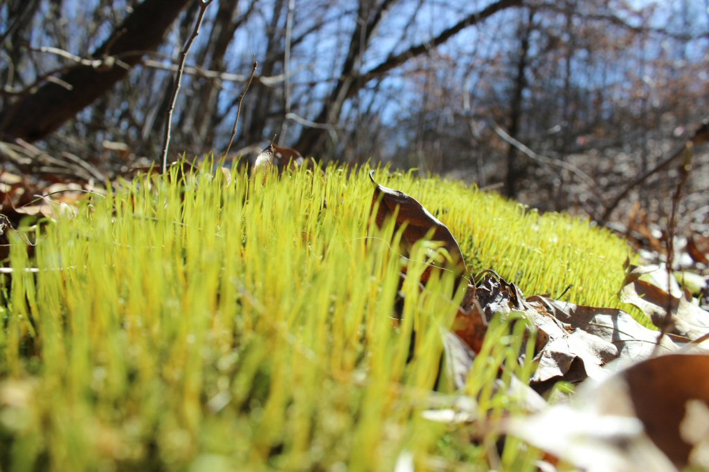 View from the grass growing with dead leaves around it - spring