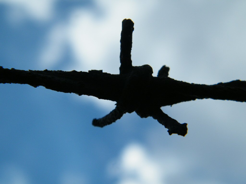Barbed wire silhouette with beautiful sky background