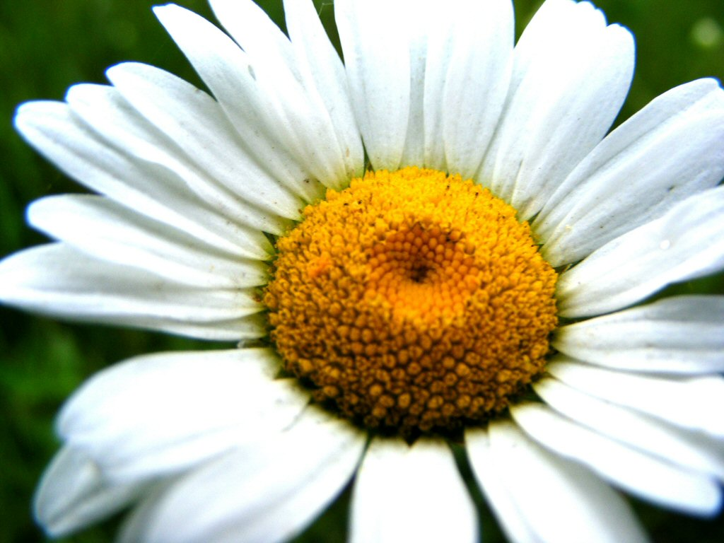 Beautiful white and orange flower with grassy green backdrop