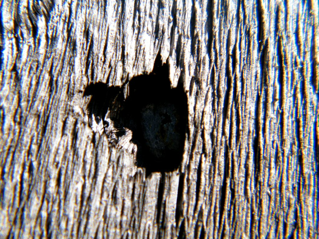 Close Up Hole in the Wood - Literally that's it. It's a hole in the wood!