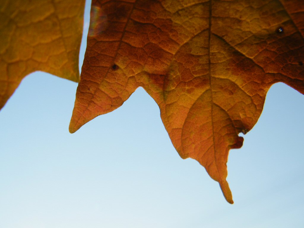 Beautiful Close Up of a Leaf Coming Down the Photo with Sky Backdrop