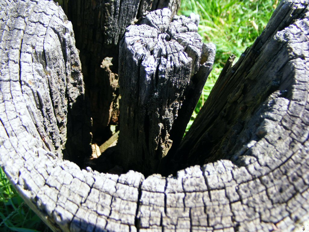 Macro Close Up of Textured Wooden Stump and Grassy Background